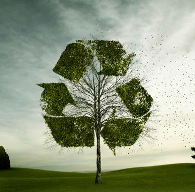 Recycling Program tree image